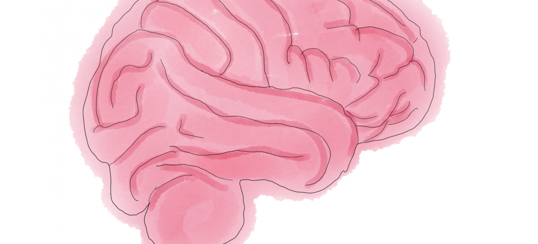Gehirn - Brain